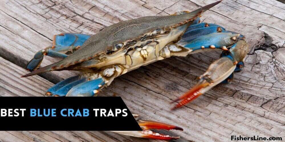 Best Blue Crab Traps