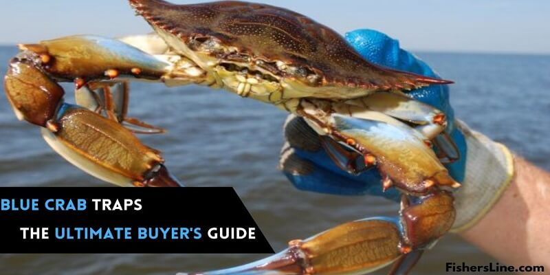 Best blue crab traps- ultimate buyer's guide