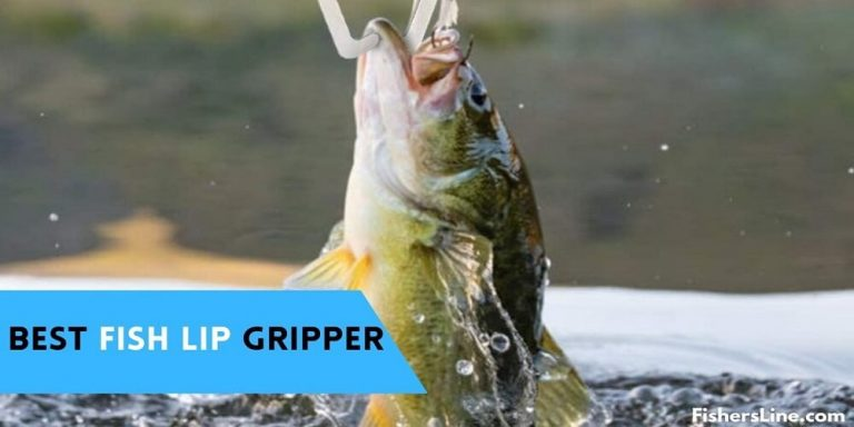 Best Fish Lip Gripper