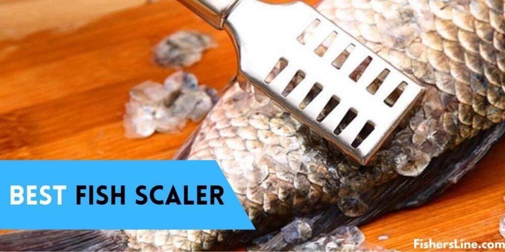 Best Fish Scalers