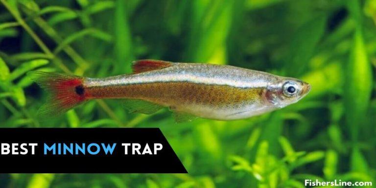 Best Minnow Traps Best Bait to Catch Minnows