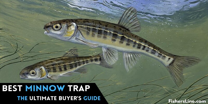 How to Pick the Best Minnow Trap The Ultimate Buyer's Guide