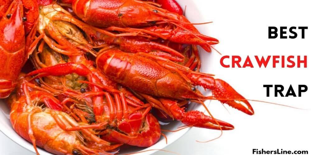 best crawfish trap