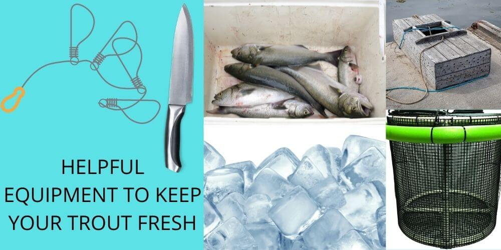 HELPFUL EQUIPMENT TO KEEP YOUR TROUT FRESH