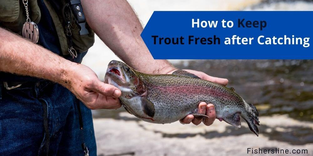 How to Keep Trout Fresh after Catching