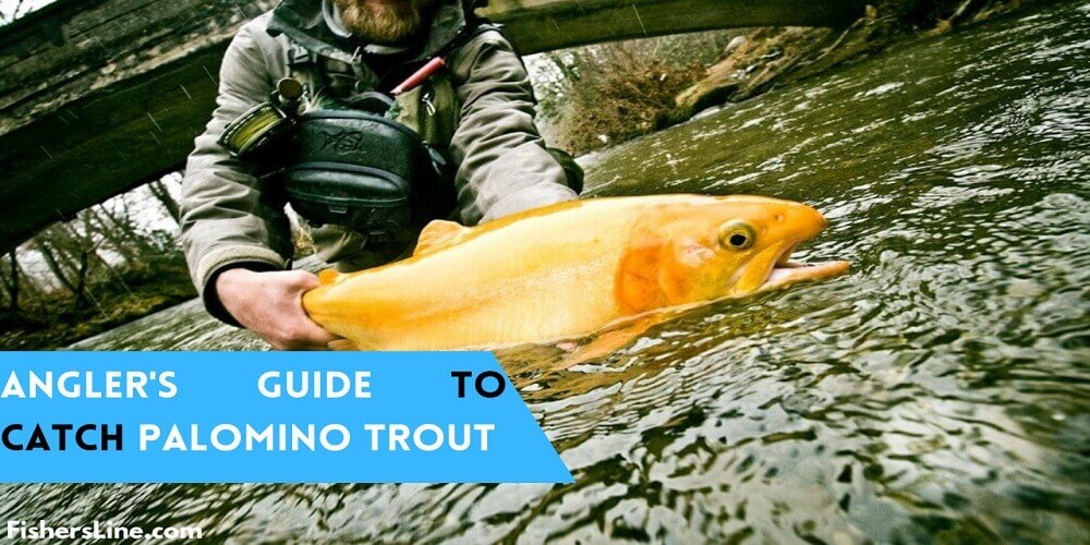 ANGLER'S GUIDE TO CATCHING PALOMINO TROUT