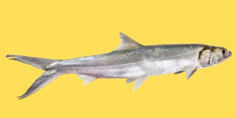 IS IT REALLY SAFE TO EAT LADYFISH